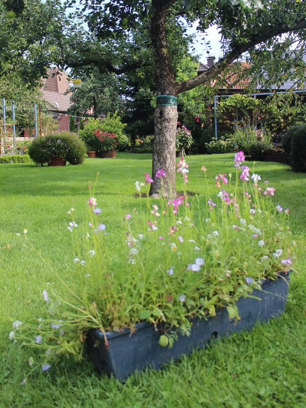 Niedrigblühende Wildblumenmischung für Kübel und Balkonkästen