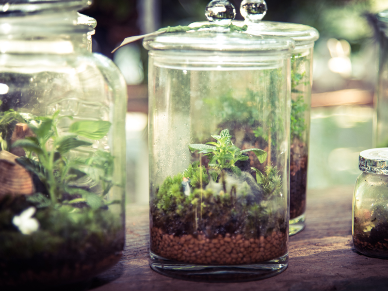 Geschlossener Flaschengarten anlegen - Anleitung