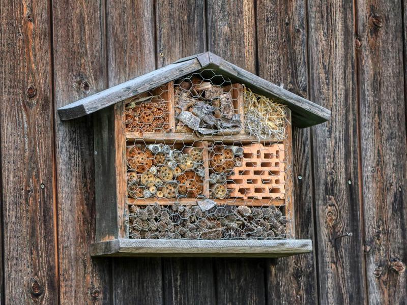 Naturschutz im Garten - Insektenhotel selber machen