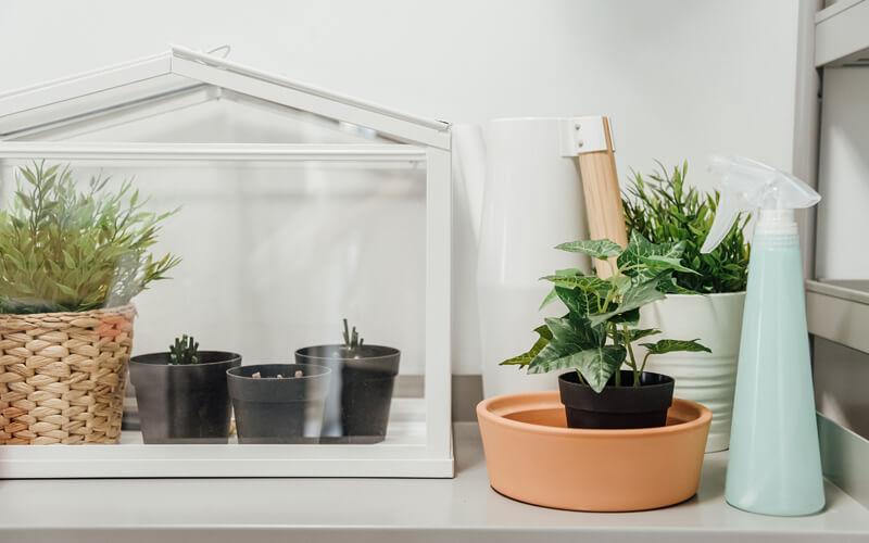 Header Anzucht-Gewächshaus / Gewächshaus für die Fensterbank