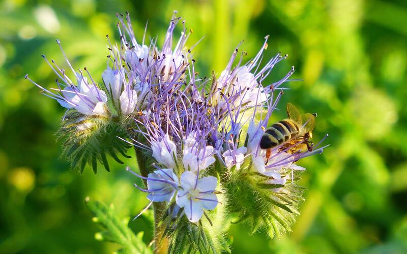 Header Bienenweide anlegen