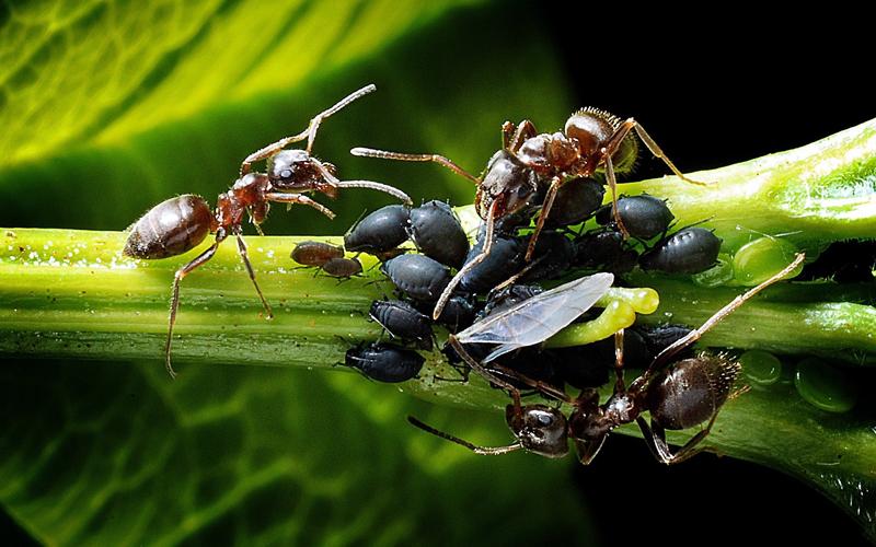 Header Biologische Schädlingsbekämpfung