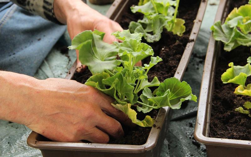 Header Easy Gardening