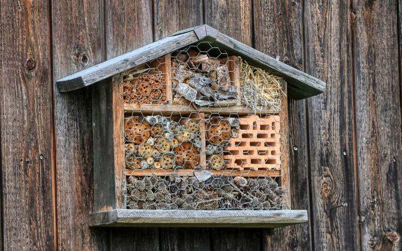 Header Insektenhotel bauen