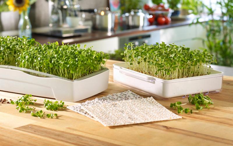 Header Microgreens anbauen
