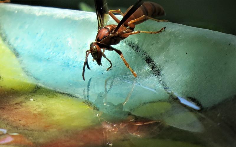 Header Vogeltränke / Insektentränke selber machen
