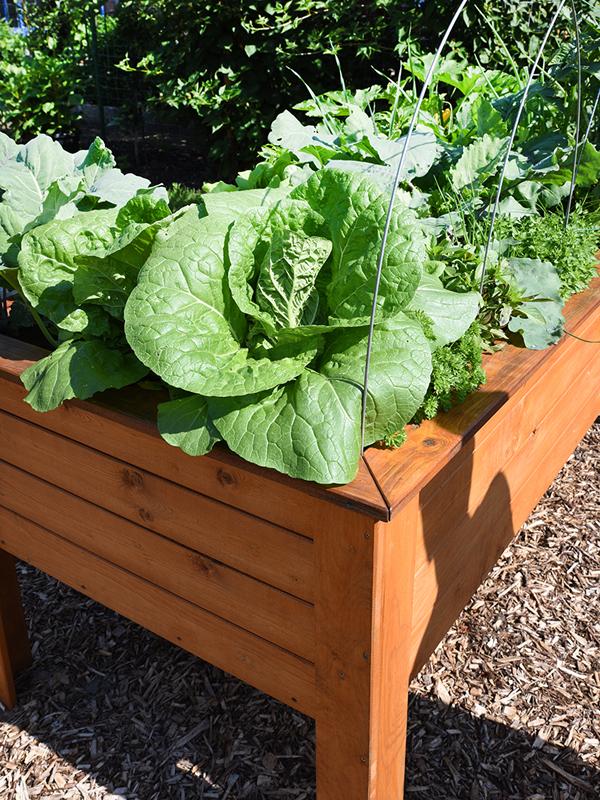 Hochbeet-Ideen für deinen Garten