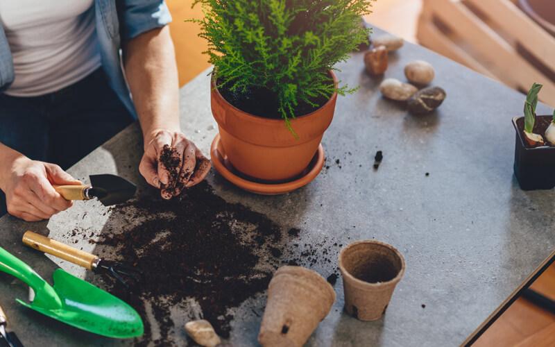 Header Indoor-Gärtnern