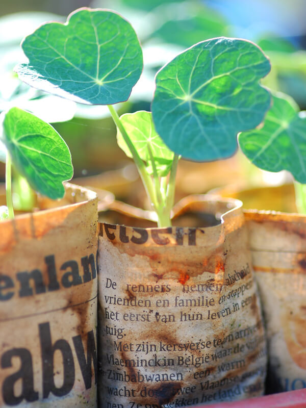Jungpflanzen vorkultivieren