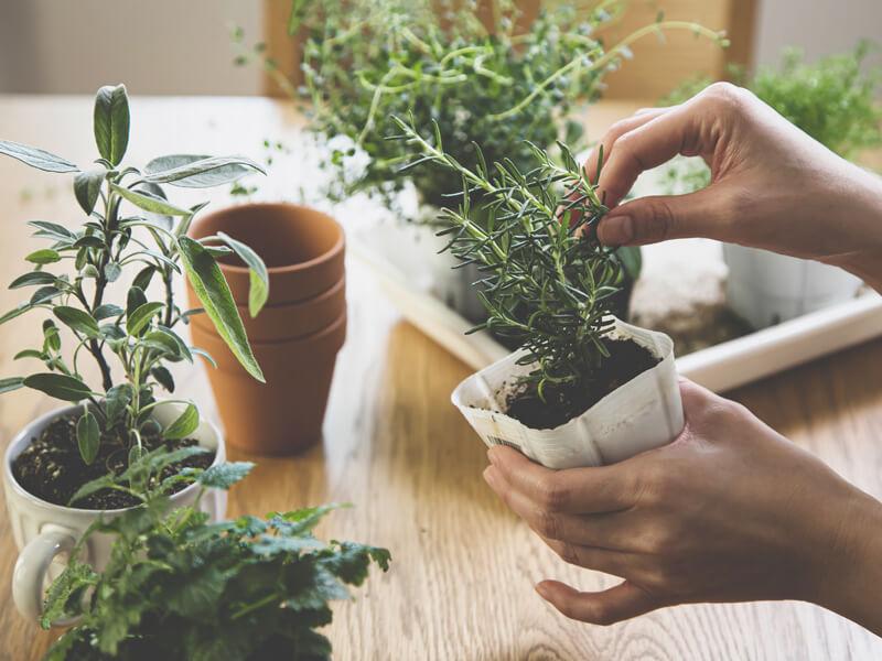 Kräuter anpflanzen für den Indoor-Kräutergarten