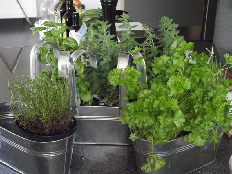 Kräutergarten indoor / Kräutergarten für die Küche