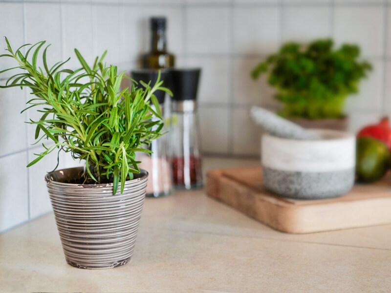 Küchenkäuter anpflanzen in deinem Kräutergarten auf der Fensterbank