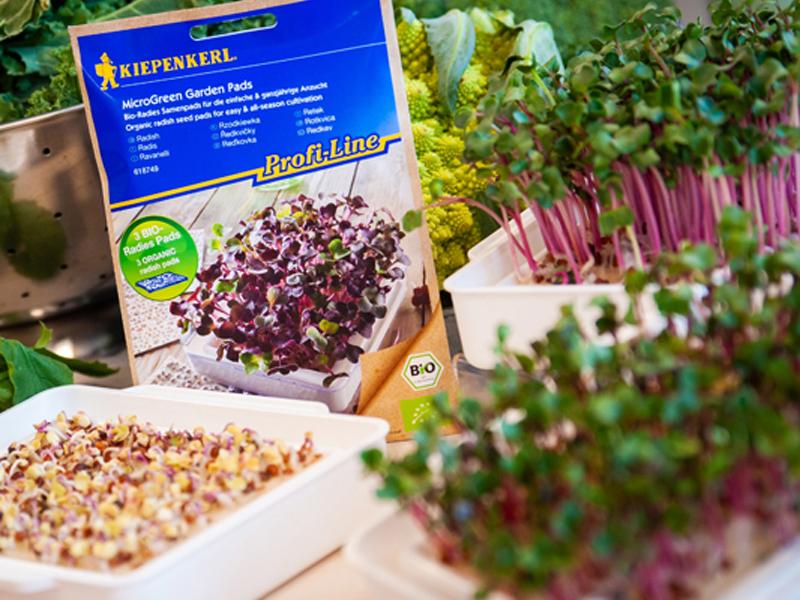 Microgreens anbauen mit Microgreens-Saatgut