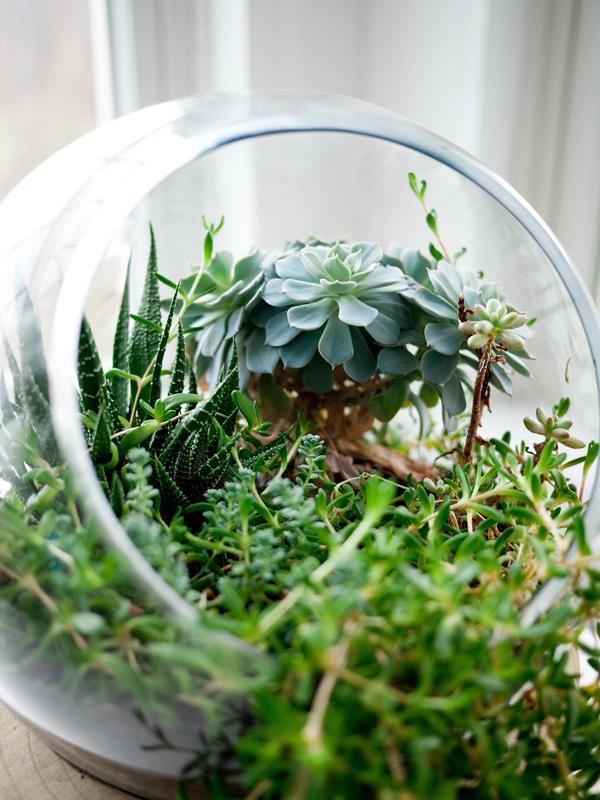 Pflanzen im Glas / Pflanzen in Gläsern