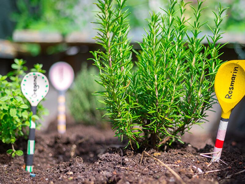 Pflanzetiketten selber machen aus Kochlöffeln