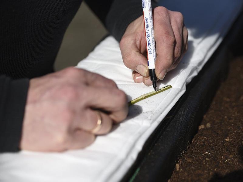 Pflanzschilder selber machen aus Holzstöcken