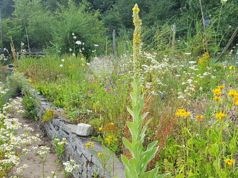 Mit einem Naturgarten Nützlinge ansiedeln