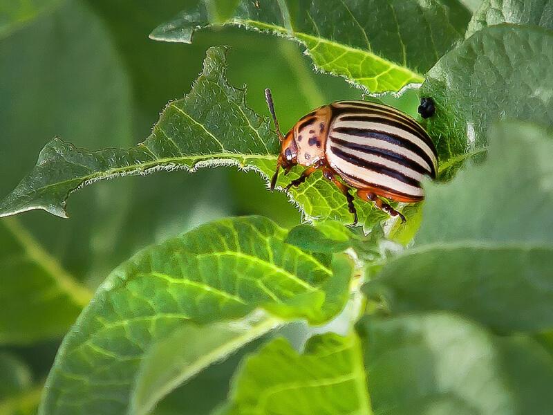 Schädlingsbekämpfung geht auf natürliche Art.