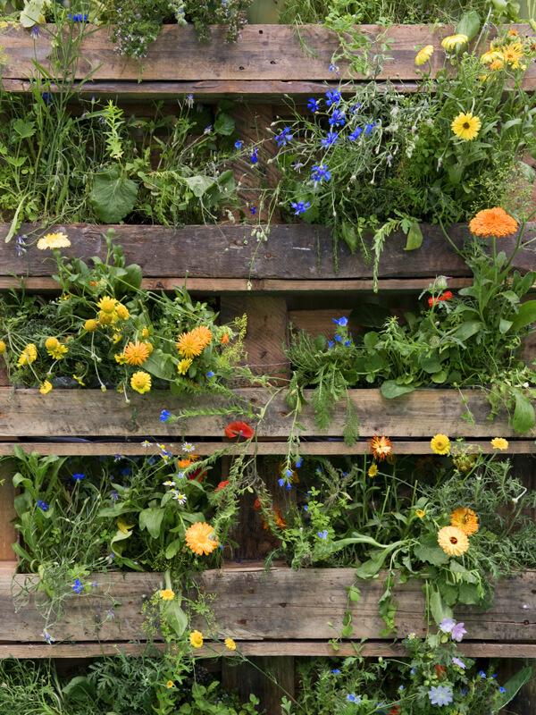 Vertikalen Garten bepflanzen
