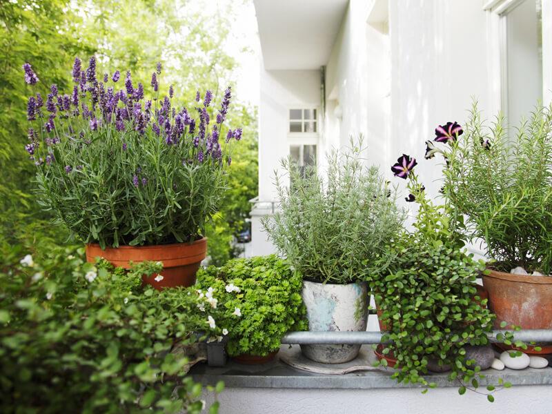 Pflanzen Balkon pflegen