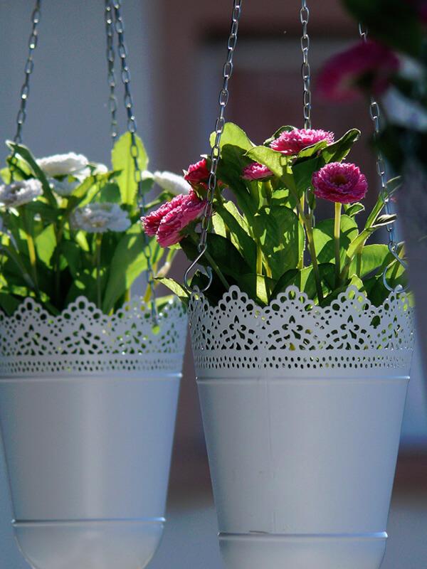 Blumenampel bepflanzen für den Balkon