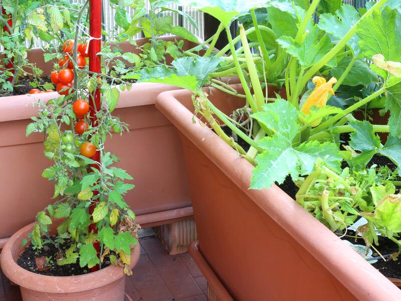 Beetplaner Balkongemüse
