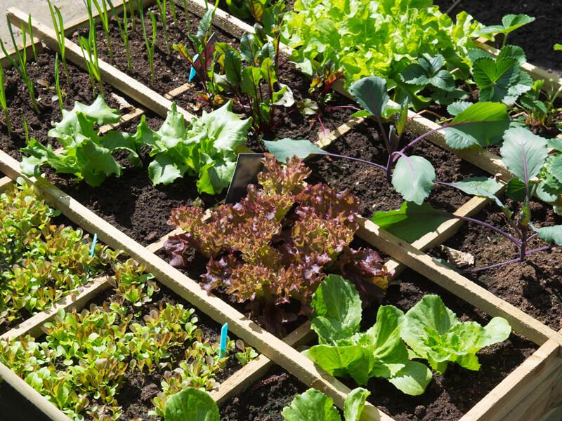 Beetplaner für deine Bio-Gemüsepflanzen / Bio-Gemüsegarten