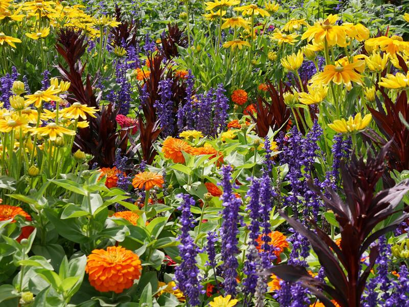 Beetplaner Blumen für Insekten