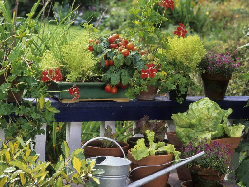 Beetplaner Gemüse im Topf pflanzen
