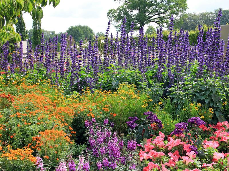 Beetplaner großes Blumenbeet anlegen