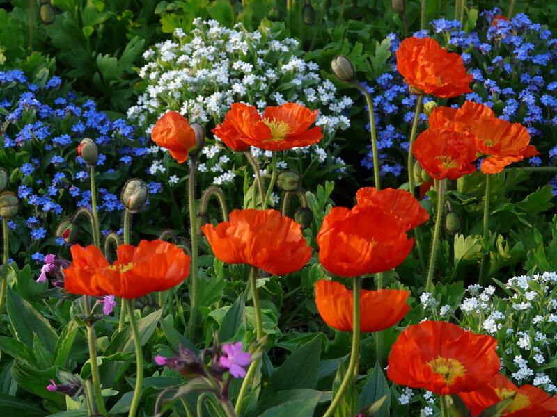 Beetplaner kleines Blumenbeet gestalten