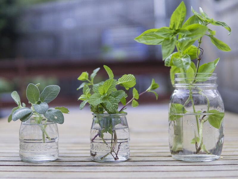 Beetplaner Kräuterteepflanzen