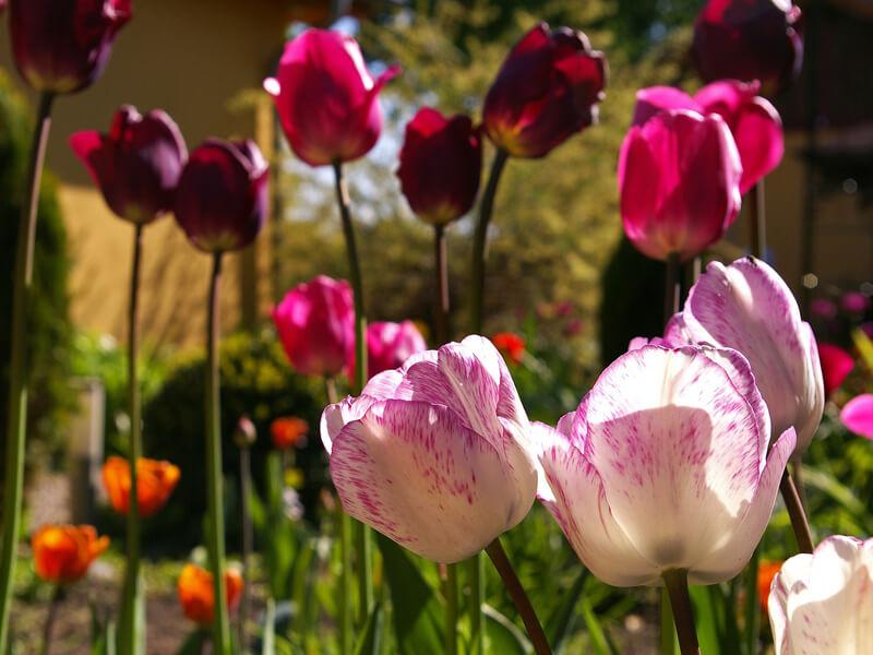 Blumenbeet farblich gestalten