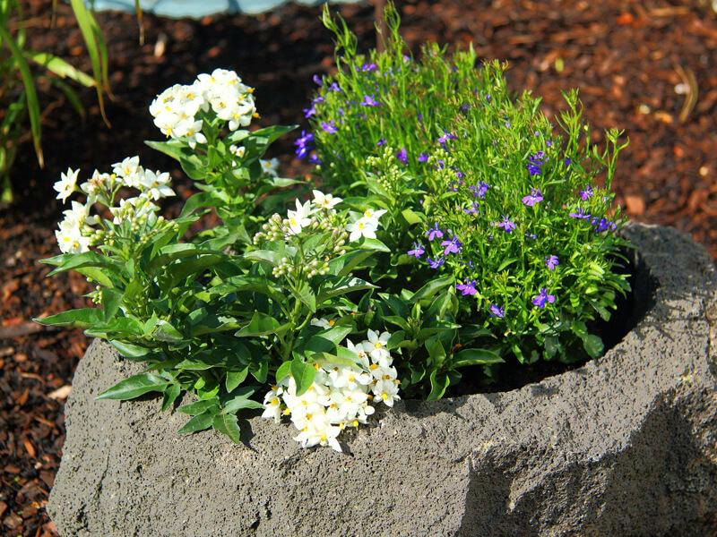 Erde für Kübelpflanzen richtig wählen