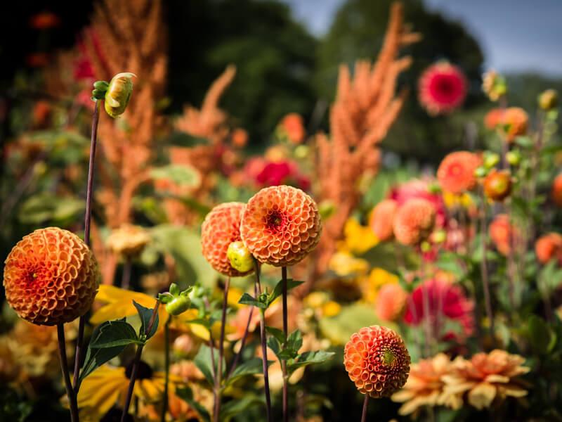 Wann werden Blumenzwiebeln gepflanzt?