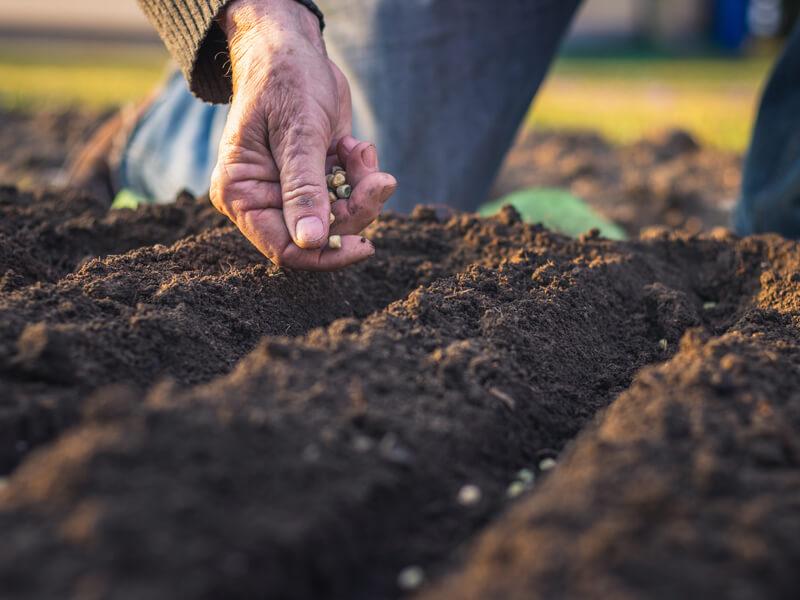 Gemüse aussäen / Gemüsebeet bepflanzen