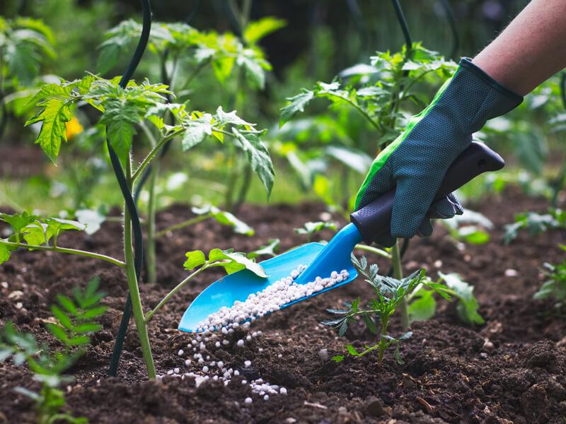 Tipps zum Gemüsebeet düngen