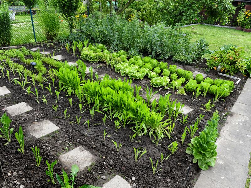 Gemüsegarten anlegen und Gemüse anpflanzen