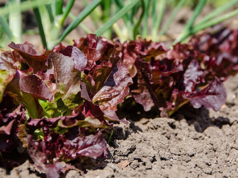 Gemüsegarten-Tipps vom Profi für Garteneinsteiger