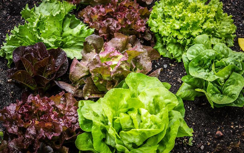 Header Beetplaner Bio-Gemüsbeet