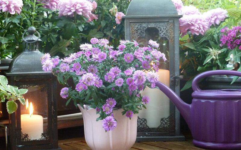 Header Beetplaner Blumen auf dem Balkon