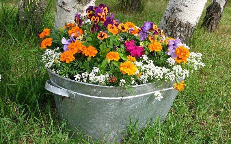 Header Beetplaner Blumen in Kübeln