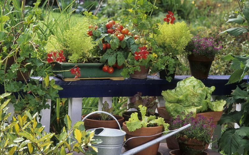 Header Beetplaner Gemüse auf dem Balkon