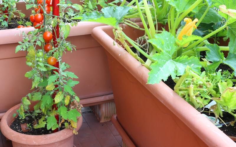 Header Beetplaner Gemüse in Kübeln