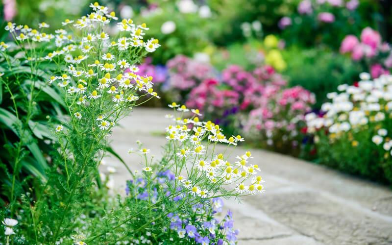 Header Beetplaner großes Blumenbeet