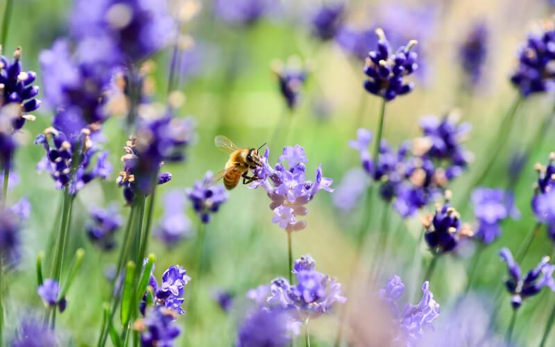Header Beetplaner nützlingsfreundliches Blumenbeet