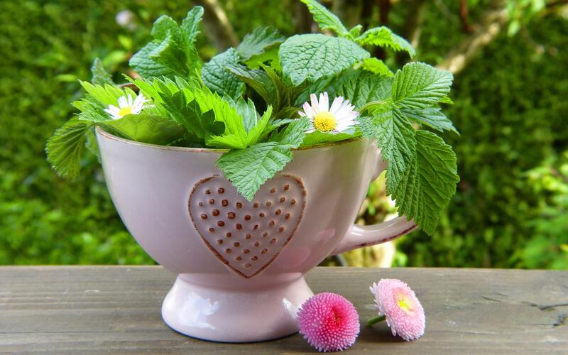 Header Beetplaner Teekräuterbeet