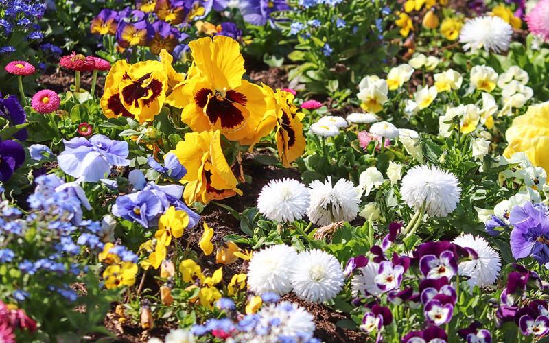 Header Blumenbeet für Anfänger