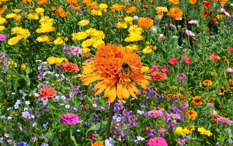 Header Blumenmischung