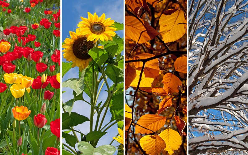 Header Gartenkalender